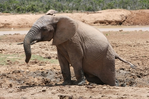 about-Elephant-Getting-unstuck